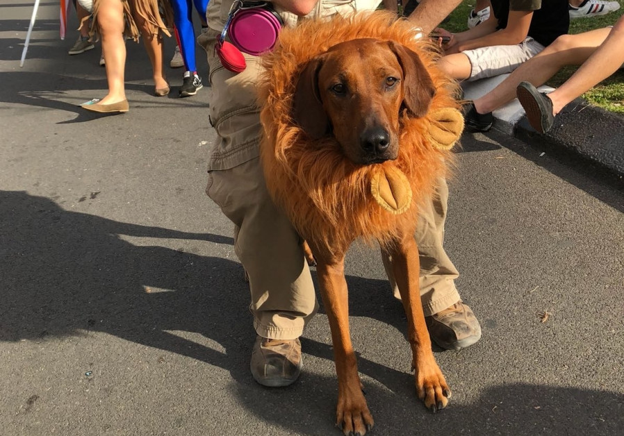 A dog dressed up for Purim, March 2018 (credit: Anna Ahronheim)