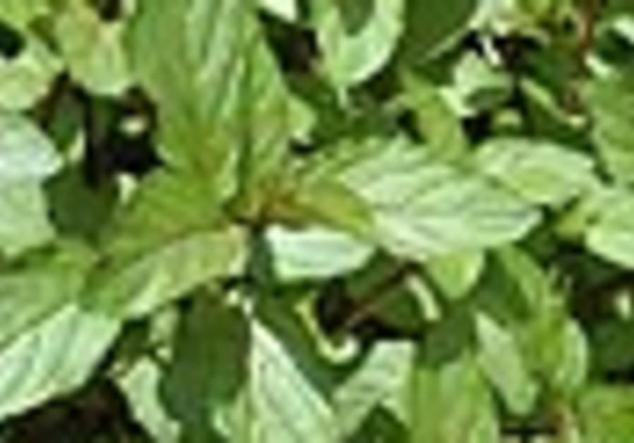 mint leaves 88
