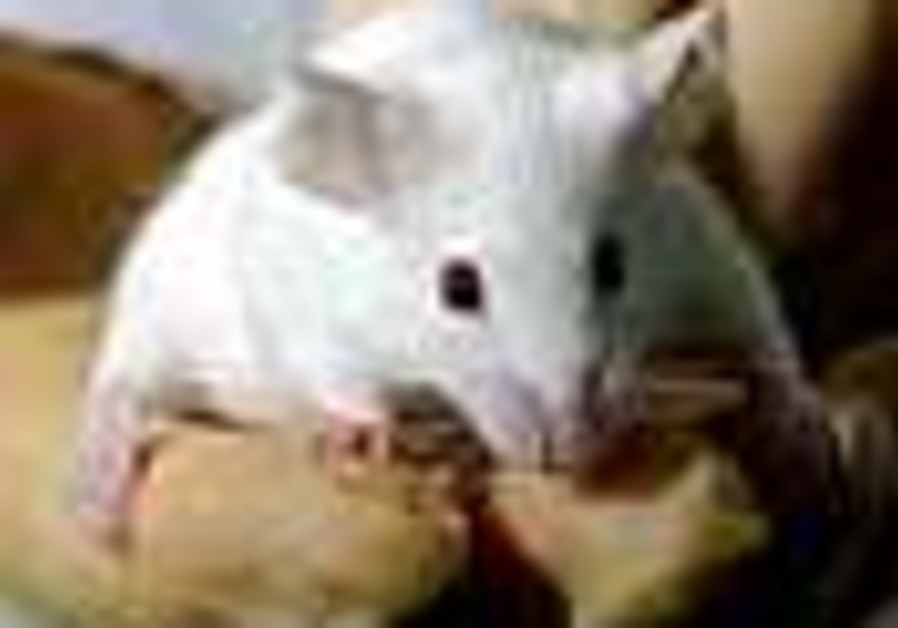 Antidepressants found to halt bone loss in mice