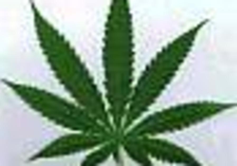 Is marijuana kosher for Pessah?