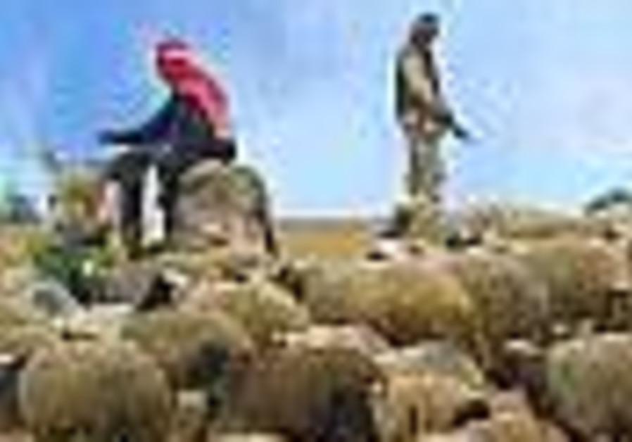 Gunmen abduct 22 Shi'ite shepherds west of Baghdad
