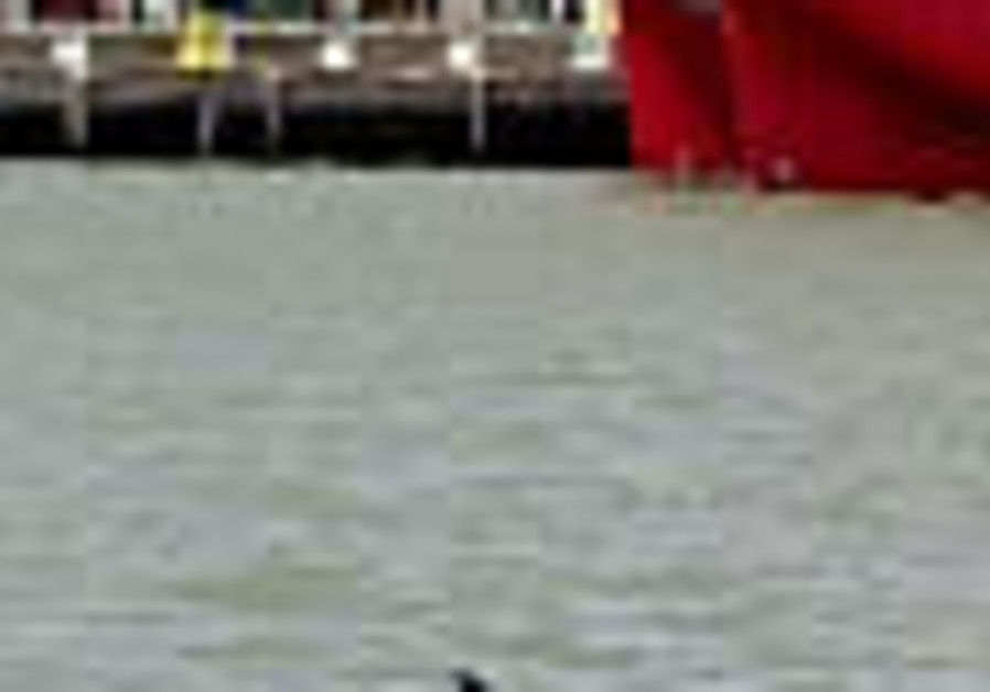 Young whale found in New York harbor