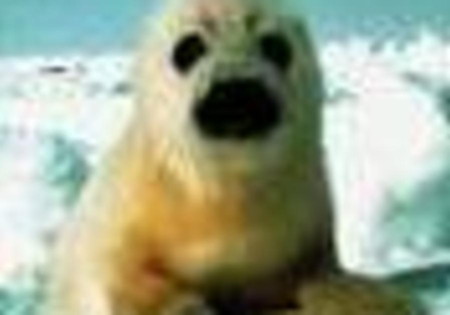 Arctic seal found in Florida