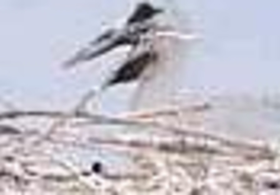 Roving white stork brings babies home to Beit She'an