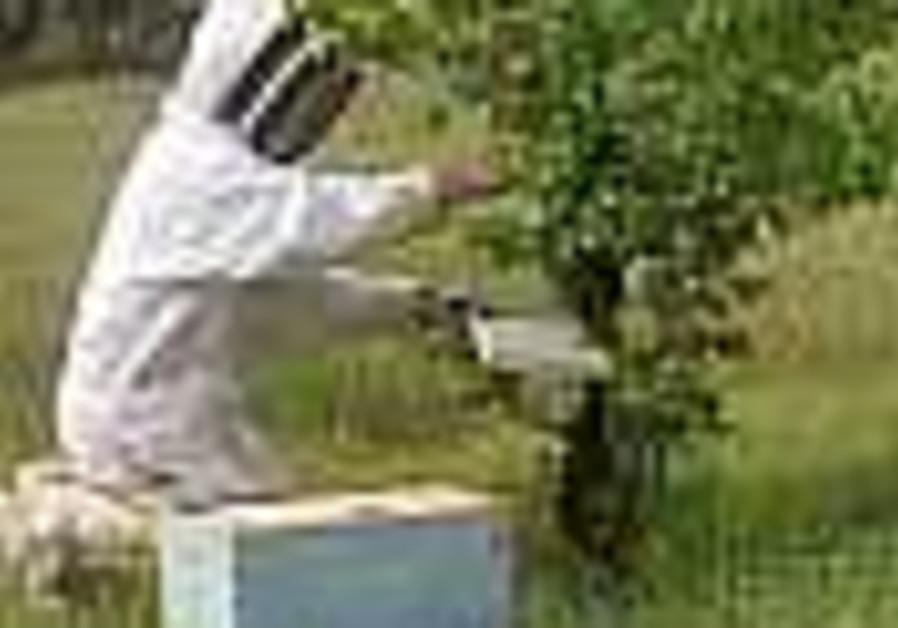 Israel fears bee-killing disease heading this way