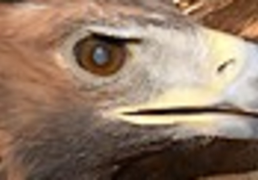 Hercules the golden eagle gets a new look at life
