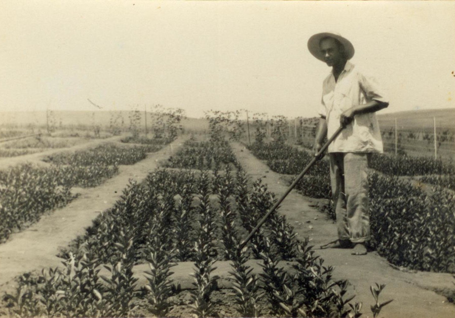 AN ISRAELI farmer who has a hard time this year will find it difficult to recover the following year. Pictured: Tending Israel's first citrus nursery in the 1930s. (Credit: Wikimedia Commons).