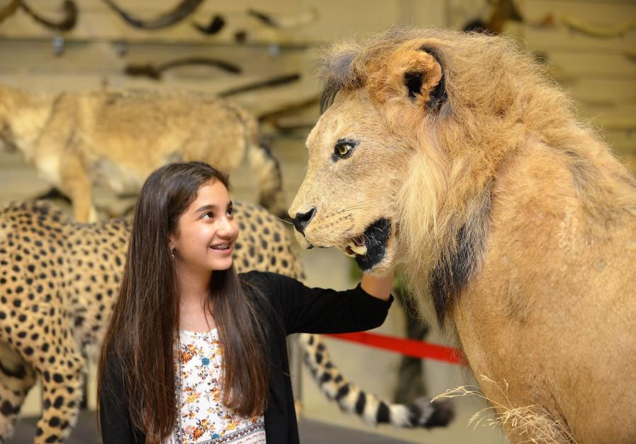 PETTING A taxidermy lion.
