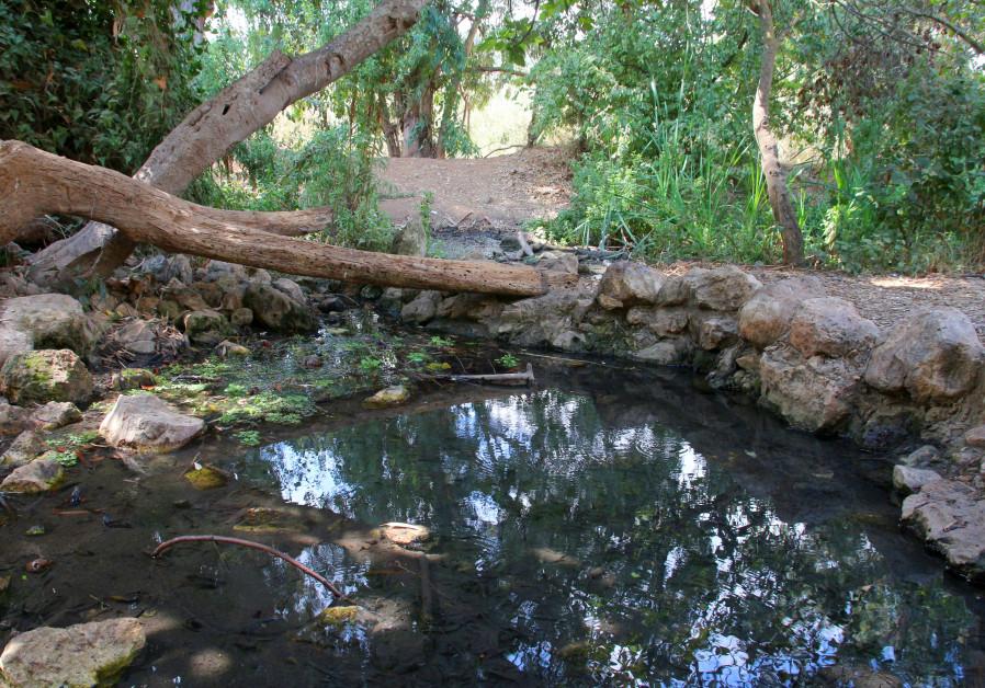 EIN MATA'S spring is partially hidden under a cluster of fig trees. (Yaakov Shkolnik/KKL Archive)