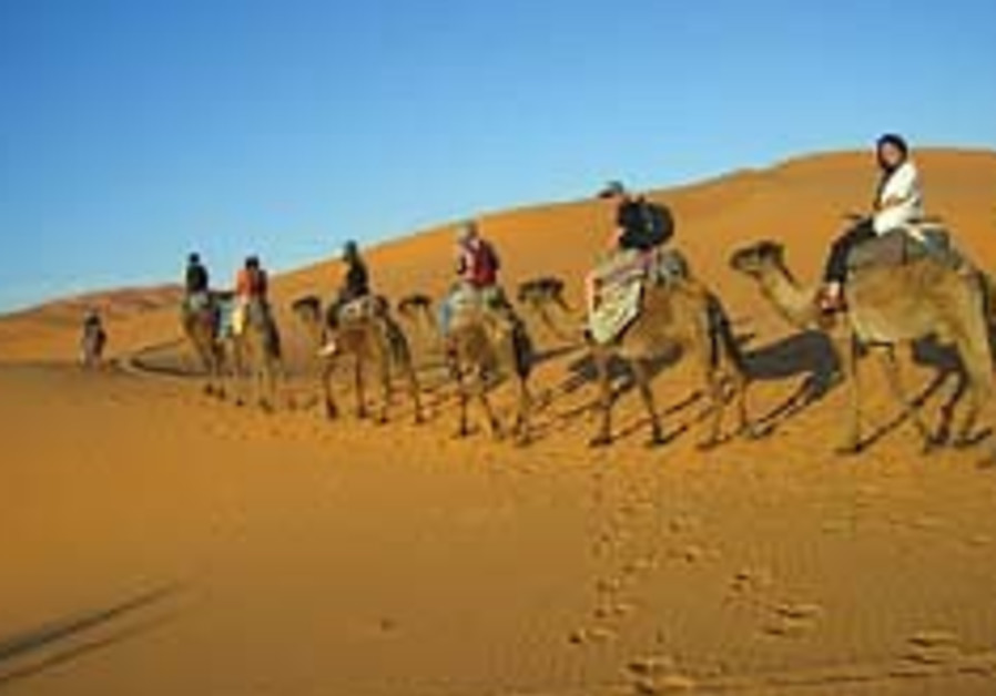 morocco camel 248