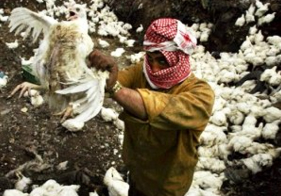 Pali holds up chicken in flock