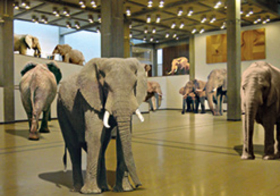 benny efrat elephants