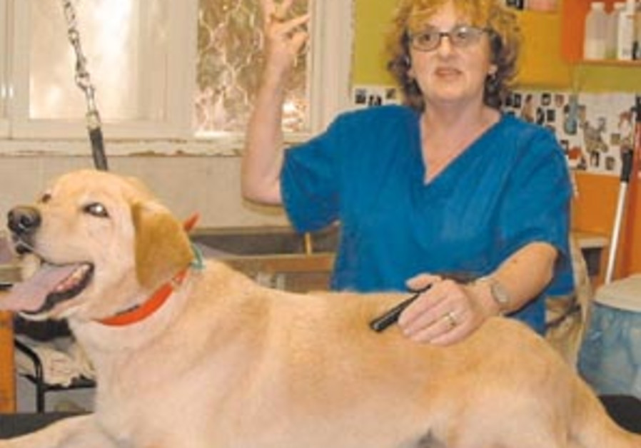 kibbutz canine 88 298