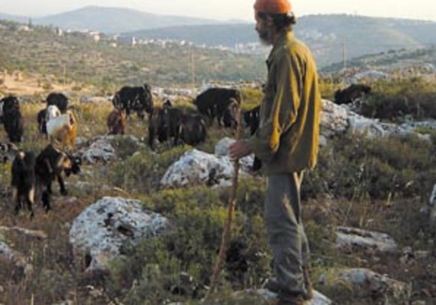 shepherd 88 298