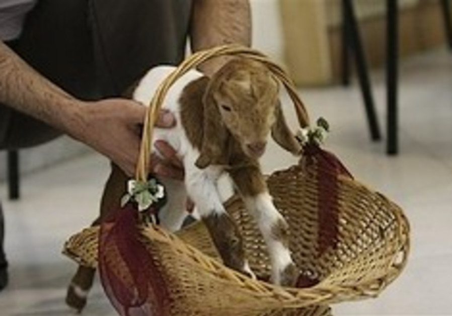 Iranian scientists claim they have cloned a goat