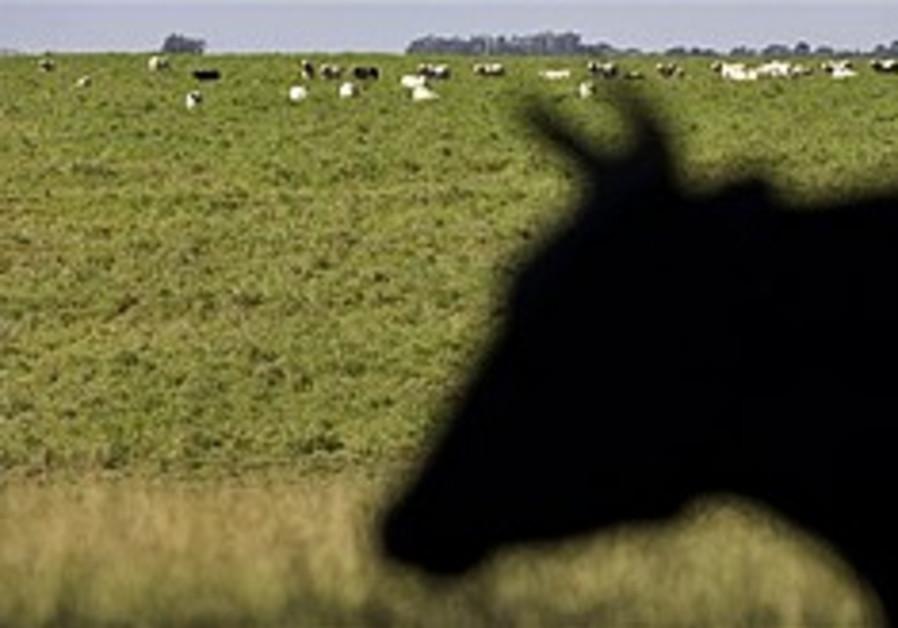 New European bill threatens 'shechita'