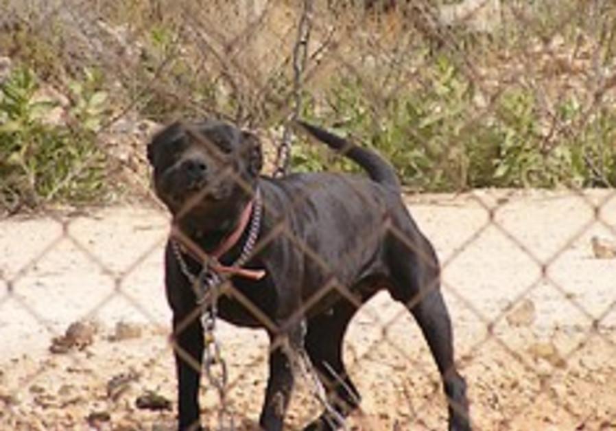 assault dog settlement 248.88