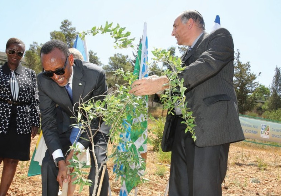 RWANDAN PRESIDENT Paul Kagame plants a tree at the Keren Kayemet Le'Israel –Jewish National Fund (KK