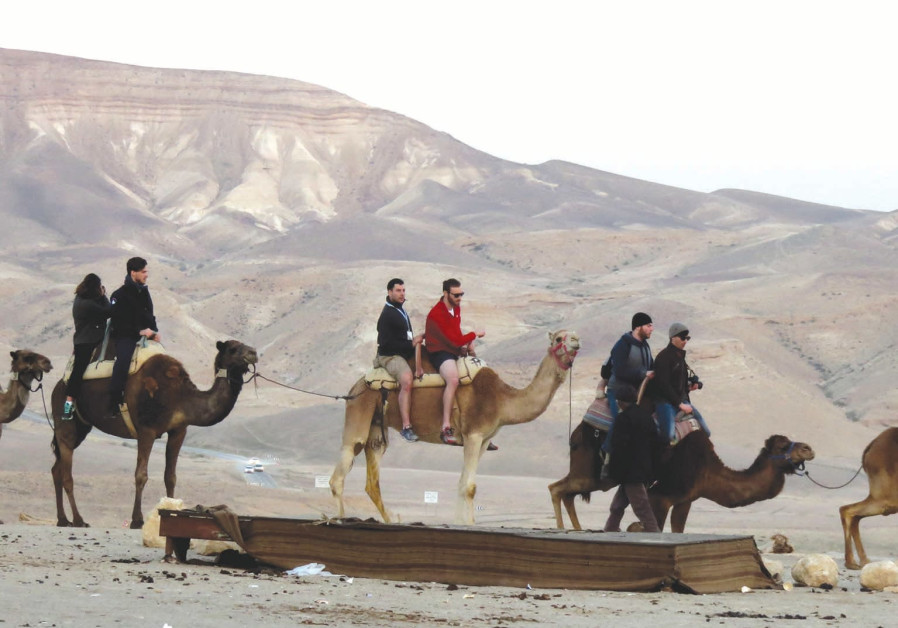 Hitch a ride with a camel caravan at Kfar Hanokdim.