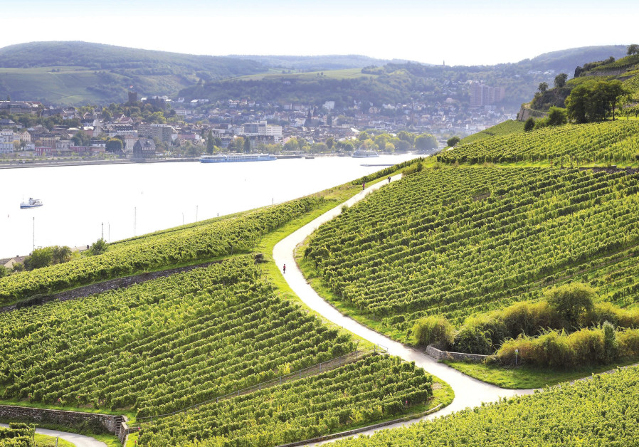 THE RHINE VALLEY vineyards of Blue Nun in Germany.