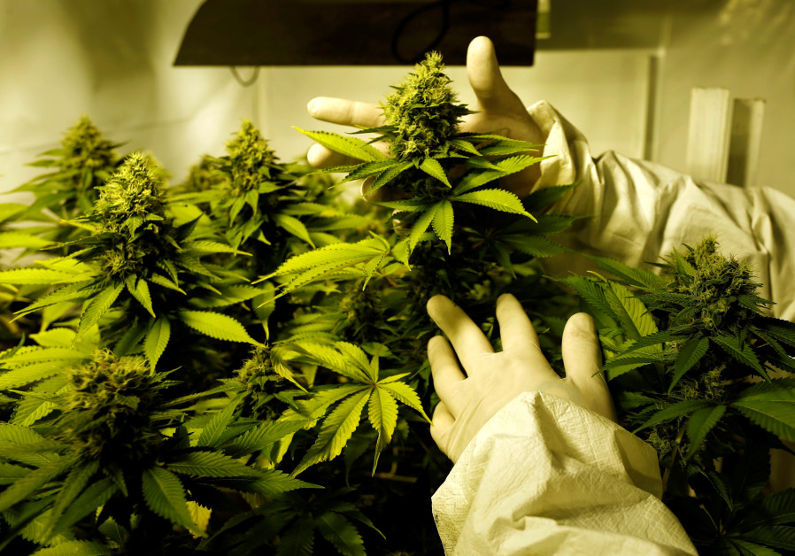 A higher calling: How Israeli marijuana research changed the world