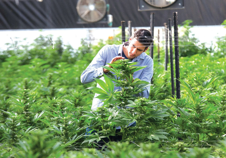 THE BREATH OF LIFE Pharma facility in central Israel may very well be the largest medical cannabis o