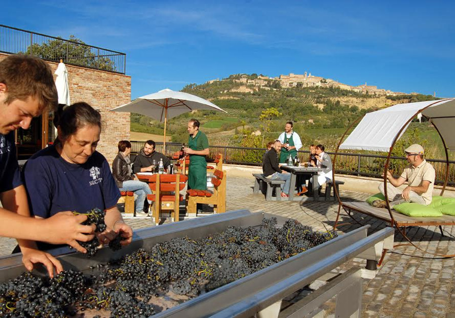 Grape sorting during harvest, as visitors enjoy wine looking on