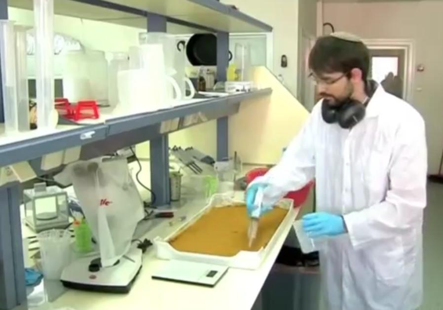 An Israeli scientist prepares food from fruit fly larvae