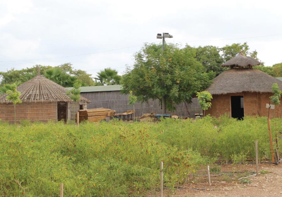 'Gojo' huts and plots of land