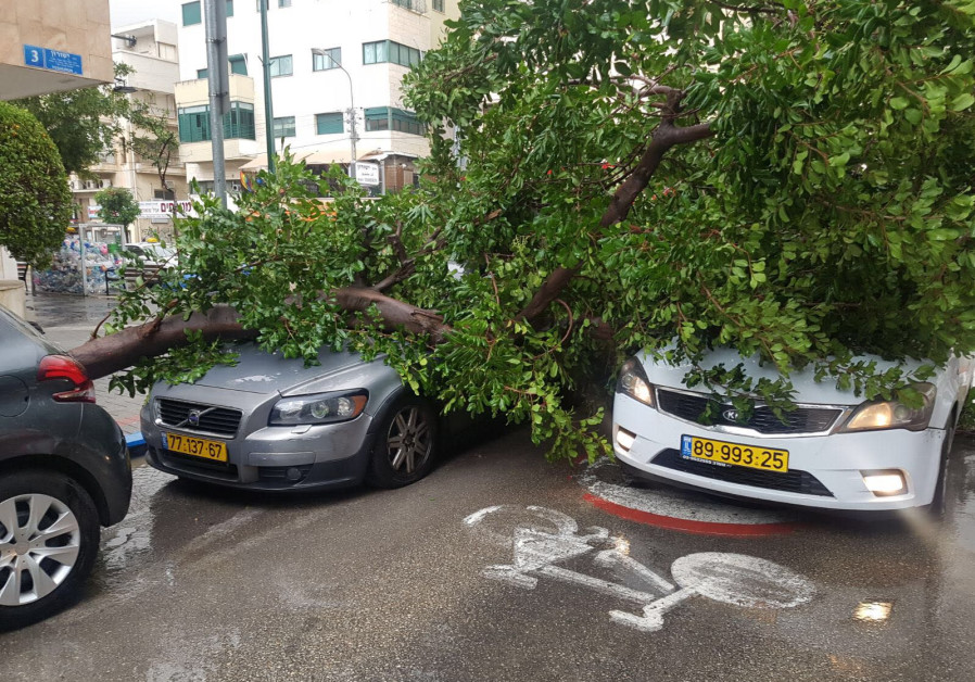 A fallen tree rests on two cars in Tel Aviv's Ben-Yehuda Street Friday.