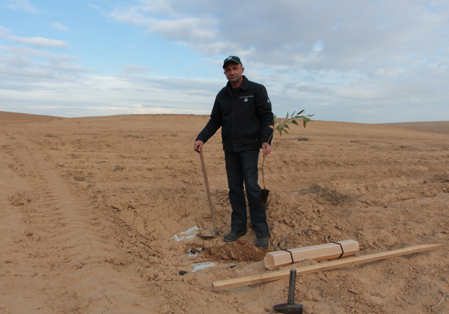 KKL-JNF forester plants a tree in Mishmar HaNegev Forest