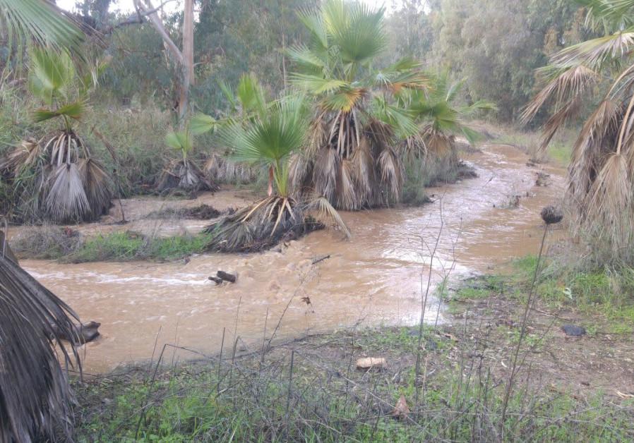 Nahal Amud flooded (Photo: The Kinneret Authority).
