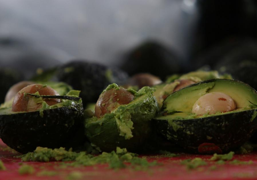 Healthy heist: Two Israeli men arrested for avocado theft