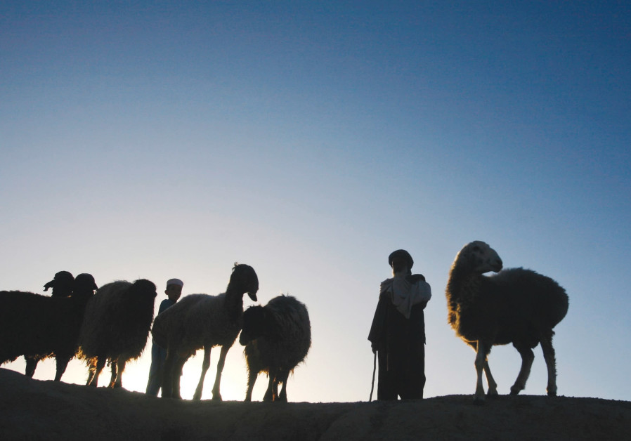 A PASHTUN man with his livestock.