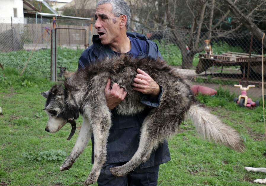 Kobi Brook holds one of the elderly canine residents of Hofshi