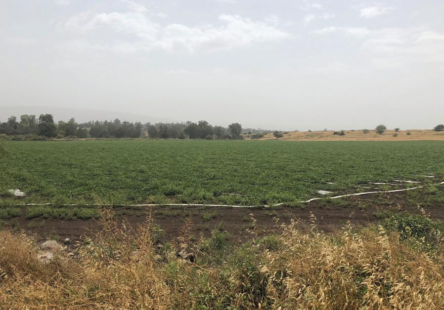 A field in the Jordan Valley
