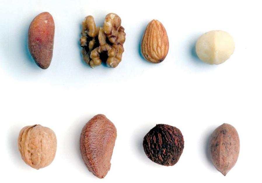 Nuts (Illustrative)