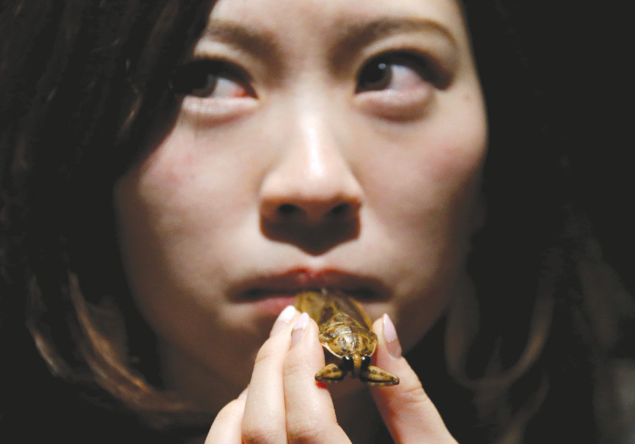 A woman prepares to eat a water bug at a bar in downtown Tokyo