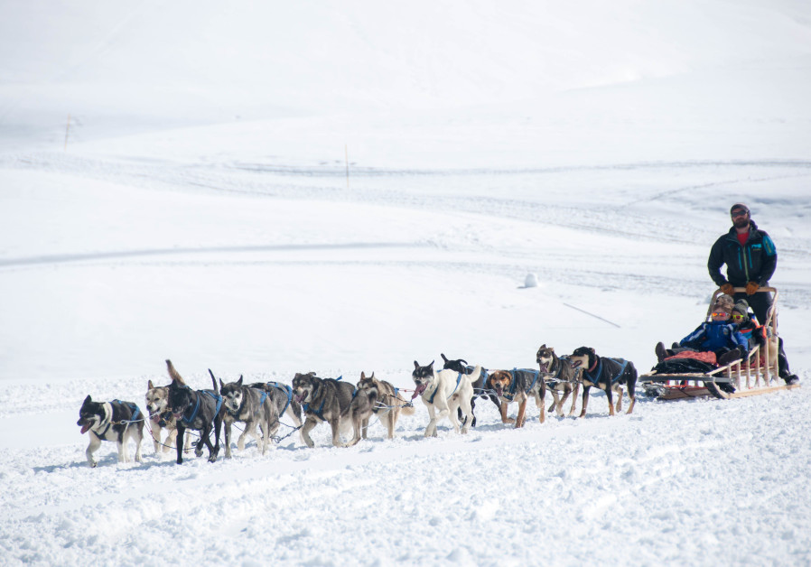 A dog sled makes its way through the snow in Mongari, a snow mobile location in Val d'Aran. The snow was well over 6 ft. deep in some parts of the mountain. (Niv Shimoni)
