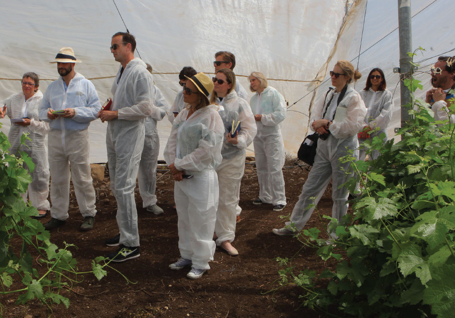 The MASTERS of Wine, clad in white suits, visit the Golan Heights Nursery and Propagation Block