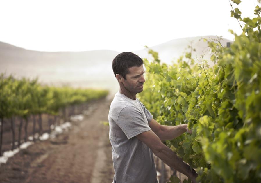 Eran Raz is the passionate wine grower of Nana Vineyard