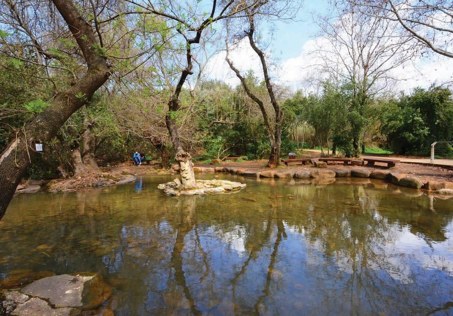 A wading pool awaits at the Tel Dan Nature Reserve.