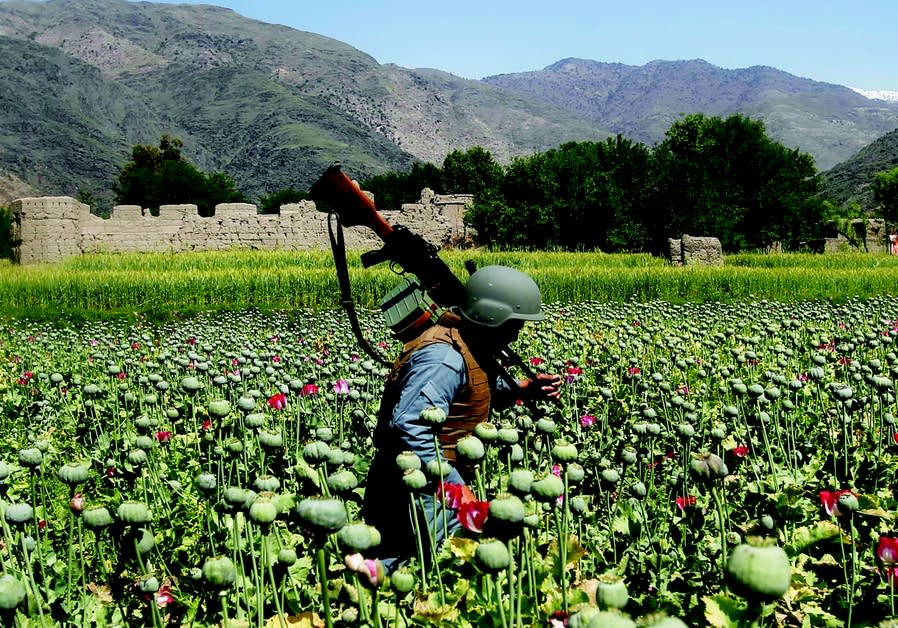 An Afghan policeman destroys poppies during a campaign against narcotics in Kunar province, 2014. RE