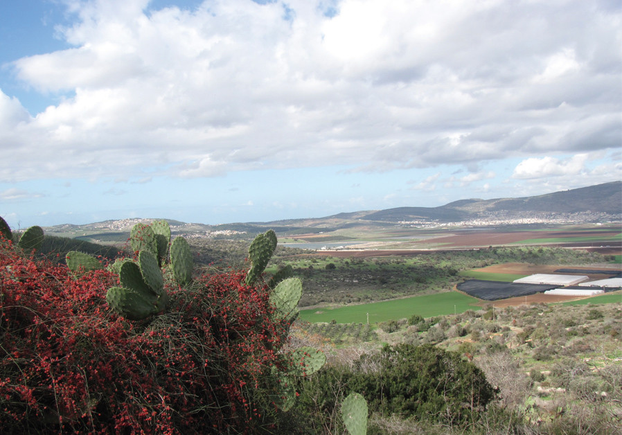 LOWER GALILEE view from Tzipori.