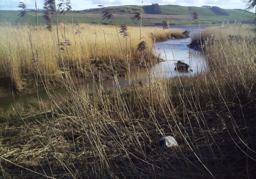 REEDS GROW in a Scottish salt marsh: 'If a person takes a bundle of reeds – can he break them at the