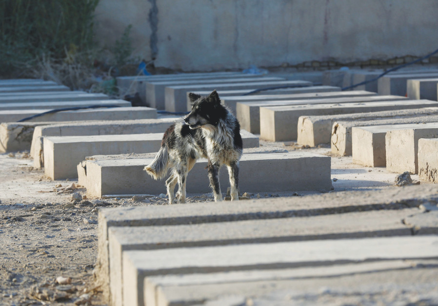 A dog is seem inside a Jewish cemetery in the Sadr City district of Baghdade in April