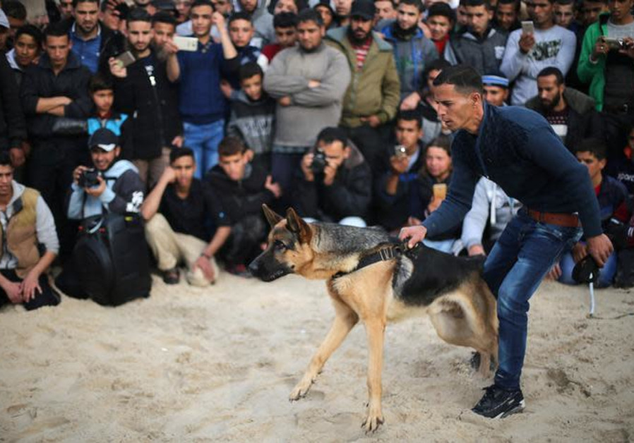 A Palestinian man holds a dog during a dog show organised by local breeders in southern Gaza Strip.