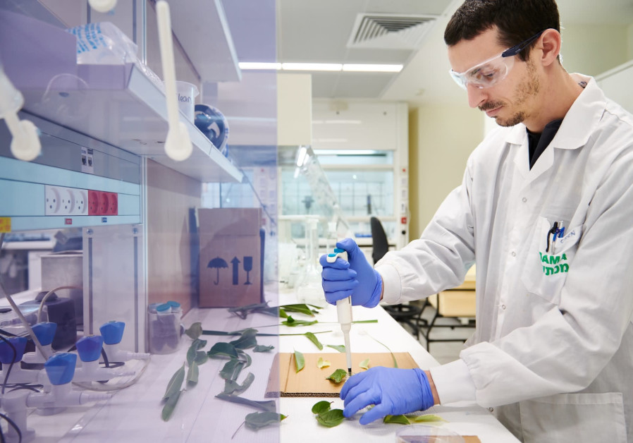 A researcher works at ADAMA's new global R&D center in Ne'ot Hovav