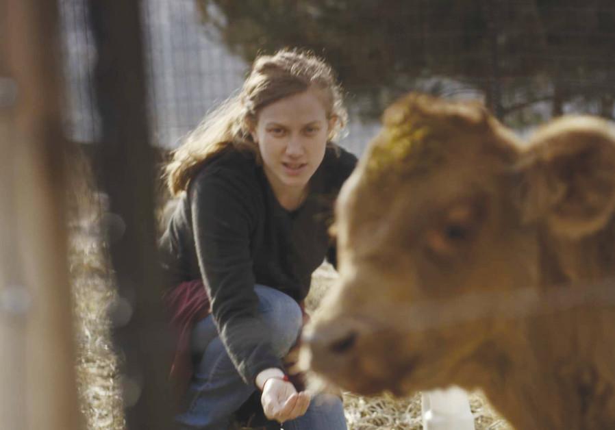 MORAN ROSENBLATT stars in 'Red Cow'