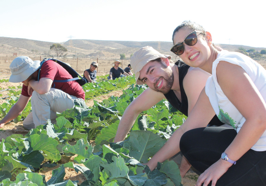 Young professionals on JNF Volunteer Vacation